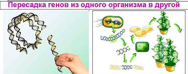 методы пересадки